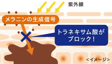 メラニンの生成信号 トラネキサム酸がブロック!